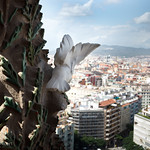 the view from one of the la segrada familia towers thumbnail