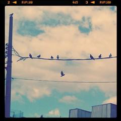 Shhhht hay pjaros en el alambre!!! (blackferien) Tags: street birds mxico square mexico aves ciudaddemxico chilangolandia iphoneography