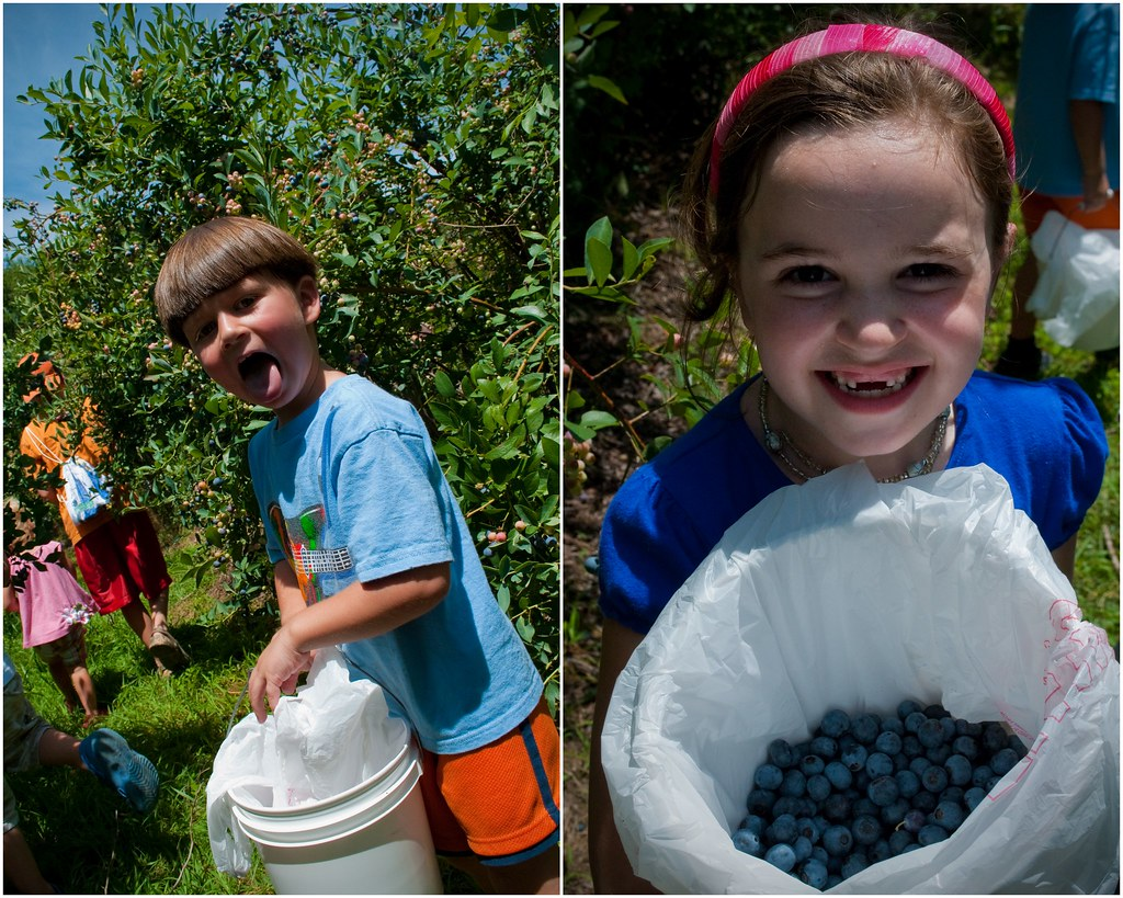 BlueberryPickingJuly20113