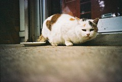 stare with fixity... (Shoji Kawabata. a.k.a. strange_ojisan) Tags: park cat 35mm lomo lca fuji with superia stare 800 omiya fixity