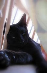 Domingo ... (Joana Joaninha) Tags: love cat casa amor gato preguia domingo varanda serelepe gatopreto joanajoaninha hellennilce