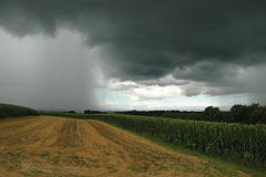 a cloud. burst. (snowdeal) Tags: usa cloud storm field rain wisconsin corn driftlessregion