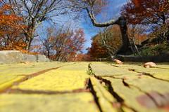 Oz (RachelNoelPhoto) Tags: autumn mountains fall nc oz whimsical themeparks yellowbrickroad beechmountain