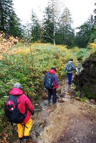 登山道を雨水が流れる