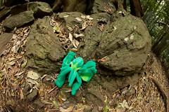 Impact (Ian James Wood) Tags: woodland rainforest lovecraft queensland tropical insanity goldcoast ef15mmf28fisheye eldergods mrcthulhu