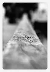 rail. (doomonti) Tags: wood white black macro water pier wasser bokeh rail railway micro makro holz baum holm usedom schiene stamm mikro geländer landungsbrücke schwarzweis