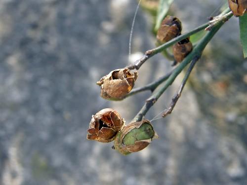 frutos 2 de palan palan
