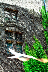 Neus Schloss (Dance Effect) Tags: green bird amazing great derb grn bild vogel krass hamma newcastel neueschloss