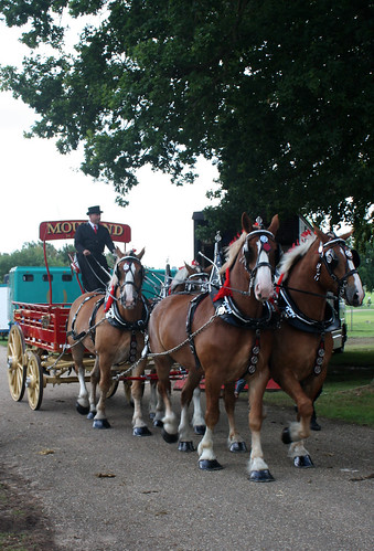 Chestnut heavy horses and carriage