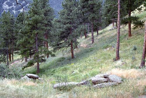 Photo - Pine Forest Flagstaff Mountain