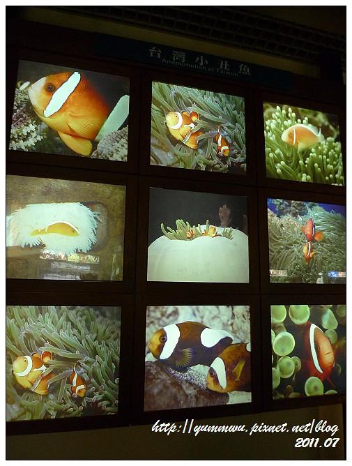 110711小丑魚主題館 (18)