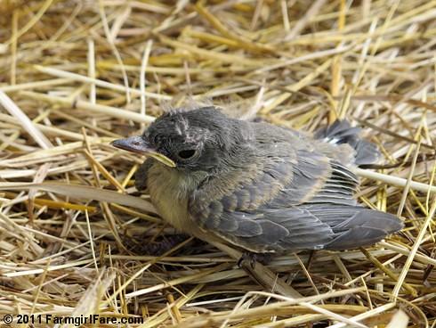 Baby bird 1