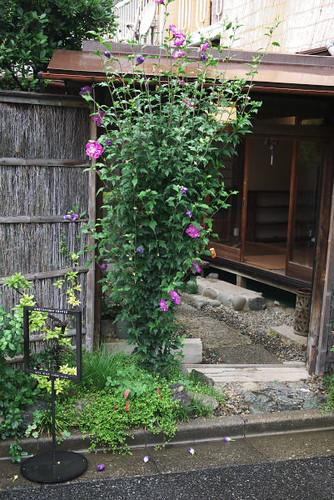 Omotesando Koffee Entrance by Rollofunk
