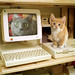 Lezione di informati-Cat !