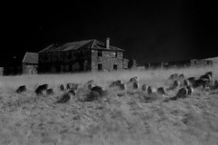 "Sheep farm in infrared • <a style=""font-size:0.8em;"" href=""http://www.flickr.com/photos/44919156@N00/5960741012/"" target=""_blank"">View on Flickr</a>"