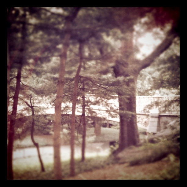 Somewhere in Central Park