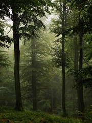 High Forest... in the rain (JoannaRB2009) Tags: las trees tree forest woods foggy poland polska fantasy polen pomeranian pomerania mga neverwinter kaszuby pomorze bej faerun mglisty doublyniceshot doubleniceshot