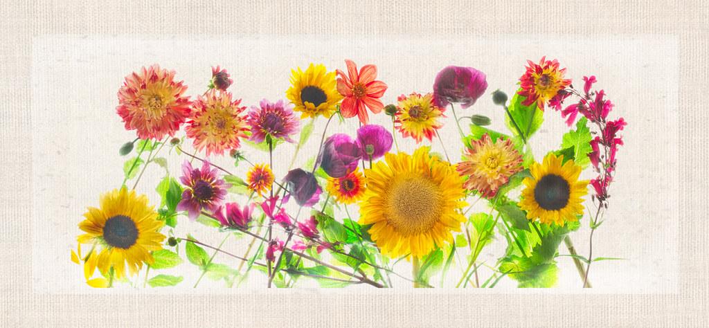 Garden Flowers Pano © Harold Davis
