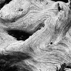 Driftwood (Brett of Binnshire) Tags: wood blackandwhite bw usa pattern maine driftwood schoodicpoint gouldsboro hancockcounty acadianpschoodicpeninsula acadianpschoodic