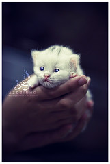 Lolo Caty ({ AZOZINHO } عبدالعزيز مسيب) Tags: cat canon mark 100mm ii 5d kuwait q8 الكويت abdulaziz عبدالعزيز قطه كانون قطوه دي azozinho azoz ٥ museib مسيب عزوزينهو