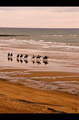 Les Cavaliers de Kessel (Fauve - Photographie) Tags: sea horses mer france beach sand sable reflet plage kessel chevaux vendée cavaliers paysdelaloire olonnesurmer blinkagain bestofblinkwinners