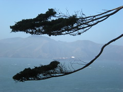 Tree Framing a Boat (Tisdel's Temerity) Tags: landsend goldengatenationalrecreationarea awesometrees tisdelstemerity