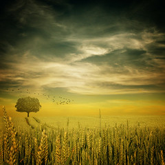 ~ late summer ~ (~ Pixel Passion ~) Tags: obramaestra