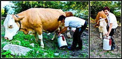 Milking The Cow (Pyranha Photography | 300k views - THX) Tags: canon photography eos austria kuh cow milk sterreich krnten carinthia holidayinn milking milch klagenfurt kirtag villach kirchtag melken milchkanne pyranha radenthein 60d villacherkirchtag mygearandme pyranhaphotography gelbesuppe kirchtagssuppekrawatte
