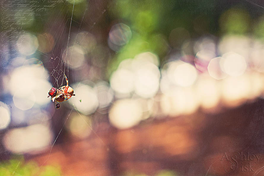 Spider Bokeh RS