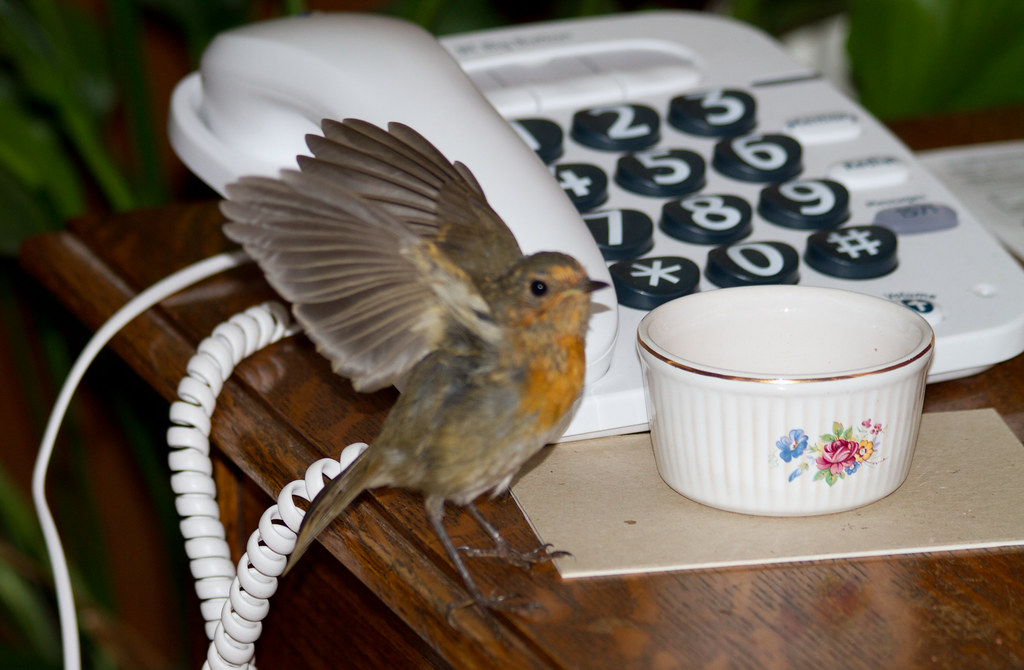There's a phone call from a Mr Robin for you