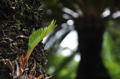 New life - green bud [explored] (e.nhan) Tags: life pink light green art leaves closeup dof bokeh backlighting enhan