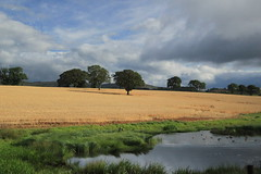Fields in summer (shotlandka) Tags: summer sun window nature field train scotland grow agriculture canoneos500d mygearandme ringexcellence