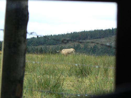 vache baraque.jpg