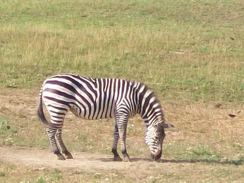 Zoo - 7-17-11 024