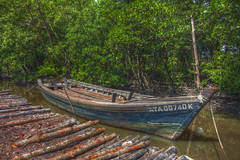 HDR - boat for transport the mangrove