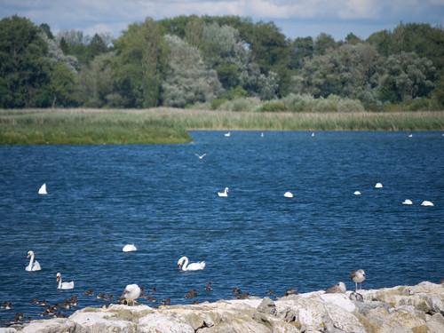 Concure Fribourg Région Morat Trois Lacs 13.jpg