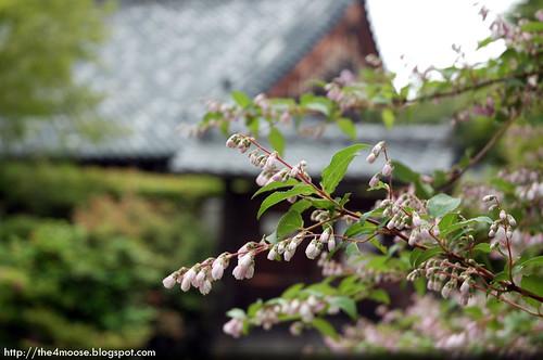 Tenryuji 天龍寺 - Flowers