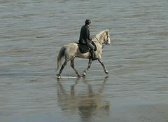 Un dimanche aprs midi en Bretagne (Pierrick M) Tags: horse praia beach cheval reflex brittany bretagne reflet plage reflexo cavalo bretanha illeetvilaine ctedemeraude leverger stcoulomb lgp3
