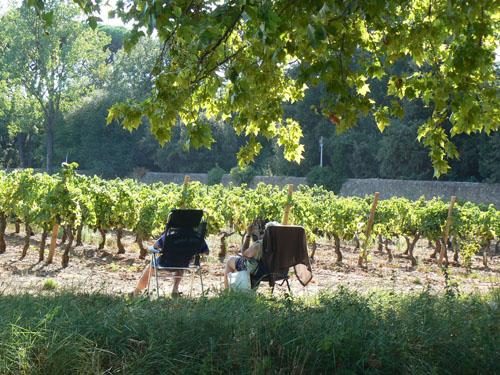 sieste dans les vignes.jpg