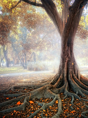 (Z Snchez) Tags: autumn tree fall hoja fog canon arbol photography photo sevilla spain arboles photographer seville andalucia otoo andalusia niebla gettyimages raiz rooth     zusanchez beautifulautumntrees
