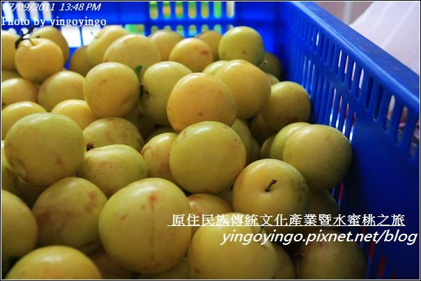 新竹尖石_2011尖石水蜜桃20110709_I0077
