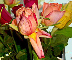 Roses-5dv by Julie70