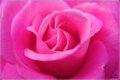 Sempre...e per sempre (bamba-vale) Tags: love nikon heart forever per sempre colori cuore amore emozioni d40