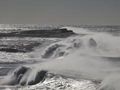 Wild horses (Peter Knott) Tags: seascape beach water surf shoreline australia olympus nsw e3 zuiko gitzo zd 50200mmswd gt2542l