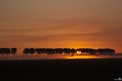 Summer Sunrise (set) (BraCom (Bram)) Tags: trees sunset summer sun mist fog early bomen zomer polder zon dike goereeoverflakkee vroeg bracom