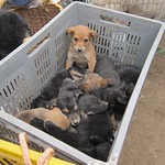 "Pile of Puppies <a style=""margin-left:10px; font-size:0.8em;"" href=""http://www.flickr.com/photos/14315427@N00/5928163346/"" target=""_blank"">@flickr</a>"