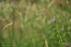 small butterfly (e.nhan) Tags: life flower green art nature leaves butterfly colours dof bokeh arts butterflies enhan