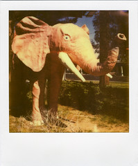 Pink Elephant (Nick Leonard) Tags: pink summer sunlight elephant art film grass animal analog polaroid sx70 artwork lasvegas nevada nick motel shrubs pinkelephant landcamera polaroidlandcamera instantfilm polaroidweek epson4490 firstflush roidweek colorshade diamondinnmotel nickleonard polaroidsx70model2 theimpossibleproject ndpackfilter roidweek2011 px680 px680ff