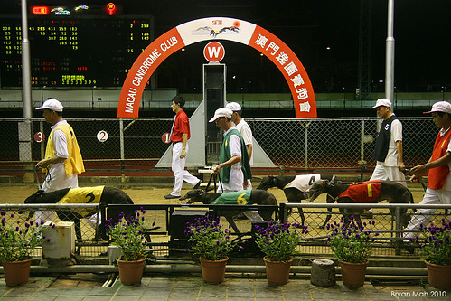 Thumbnail from Macau Canidrome Club