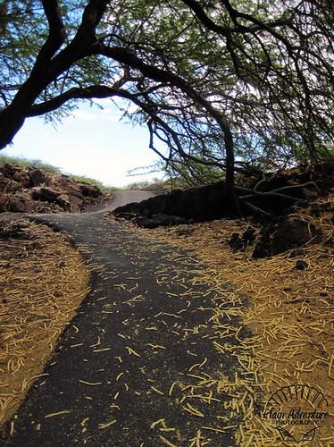 Path to Makaiwa Bay